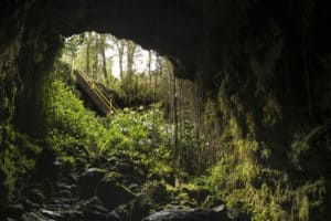 Kaumana Caves Park, Island of Hawaii