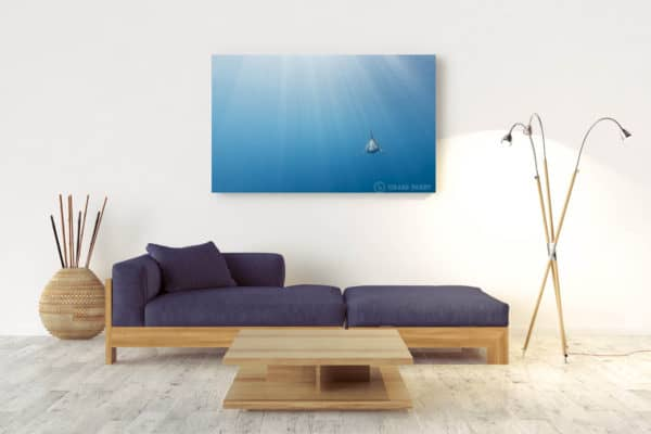 Evolution | Pacific Ocean - Acrylic Wall Mount