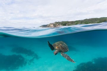 Light house Turtle | Byron Bay