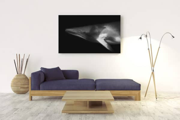 Minke Portrait | Great Barrier Reef Australia - Acrylic Wall Mount