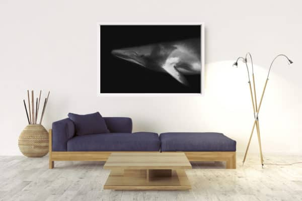 Minke Portrait | Great Barrier Reef Australia - Box Frame (White) - No Border