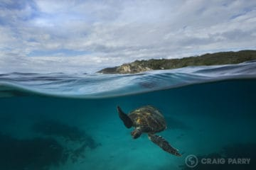 Lighthouse Turtle | Byron Bay