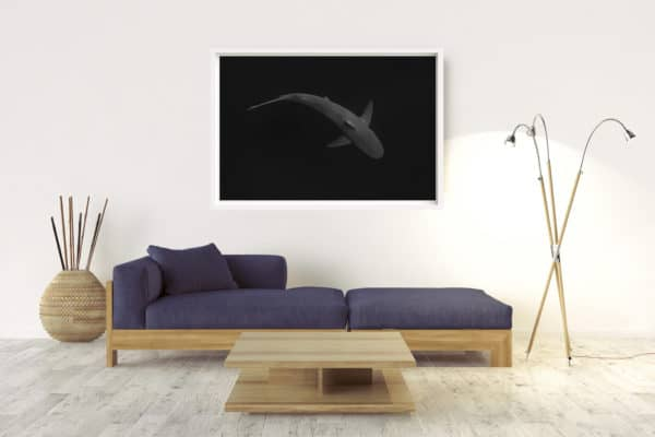 SHARK | BYRON BAY - Box Frame (White) - No Border
