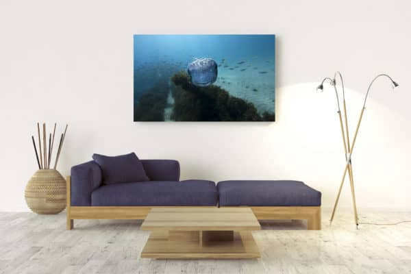 Thomas | Byron Bay - Acrylic Wall Mount
