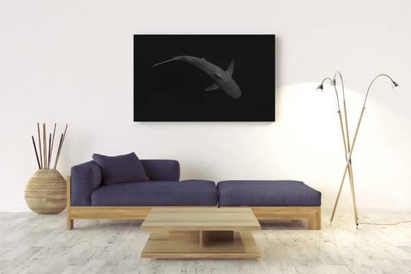 SHARK | Byron Bay - Wall Mount by Craig Parry Photography