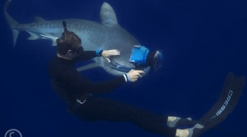 Photographing Sharks with Craig Parry