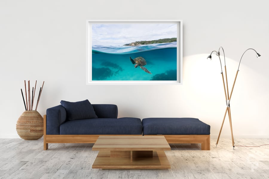 Lighthouse Turtle | Byron Bay - Box Frame (White) - Border