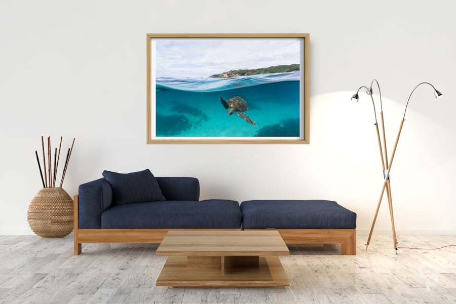 Lighthouse Turtle | Byron Bay - Box Frame (Raw) - Border