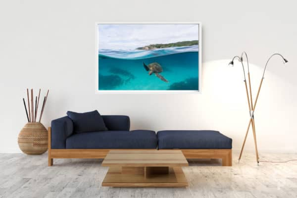 Lighthouse Turtle | Byron Bay - Box Frame (White) - No Border